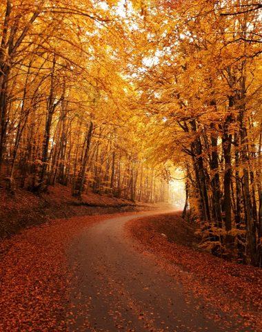 forêt du Bugey