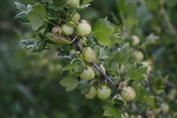 Au Millieu des fruits du Bugey