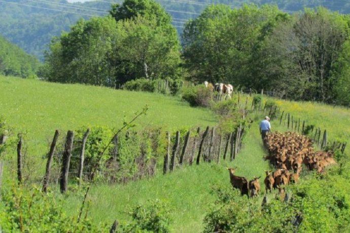 Gaec de la Pinsonne à Arandas