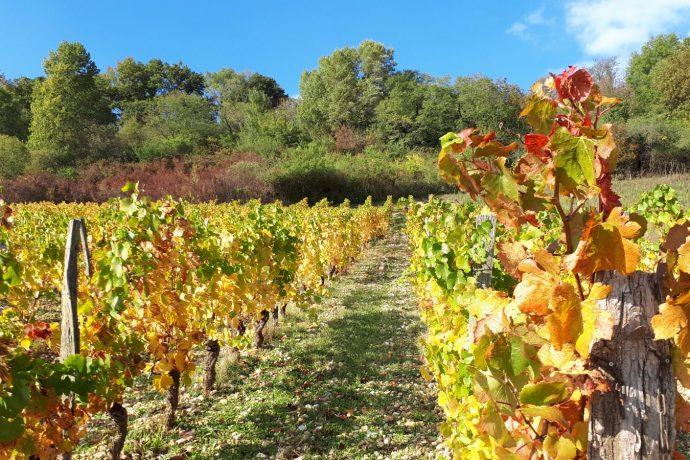 In vino visitas